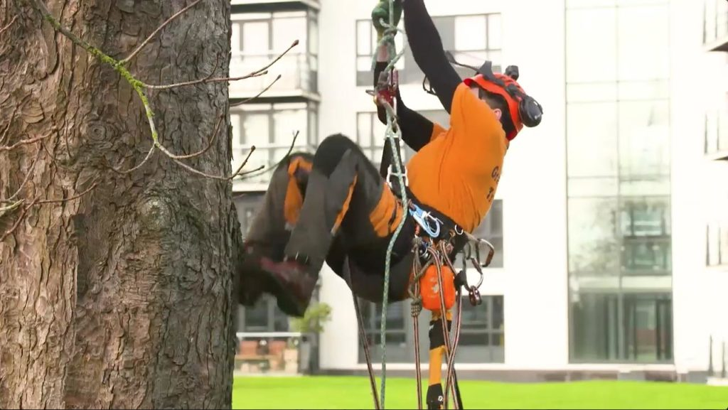 tree surgery_grasshopperservices.ie