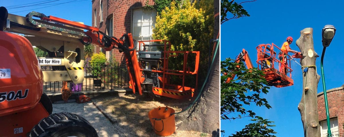 tree surgeon_tree surgery_grasshopperservices.ie