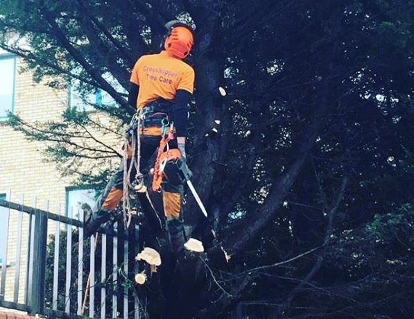 tree surgery_storm damage_grasshopperservices