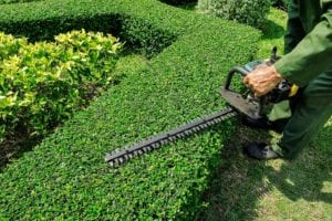 """Hedge Trimming"""