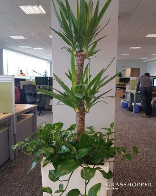 office plants_Interior Planting - Invest in the well-being and productivity of your employees